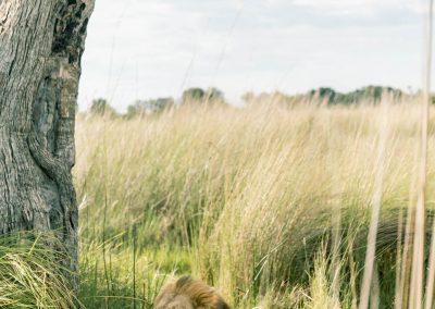 AndBeyond Nxabega Okavango Tented Camp