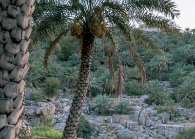 20180905 Misfat Al Abreyeen DSC01160